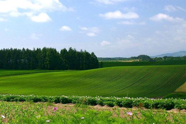 Что нужно учесть при покупке земельного участка